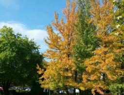st cyp automne