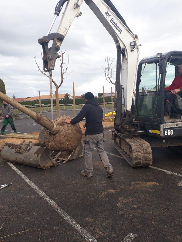 arbre muriers (3)