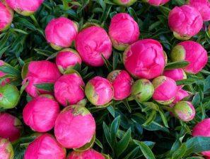 Nouveauté sur le Marché : Arrivée d'une fleuriste à compter du samedi 20 Juin 2020