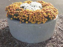 Campagne hivernale de fleurissement raisonné des massifs de la Commune