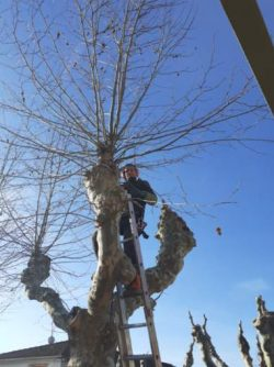 NETTOYAGE arbres (1)