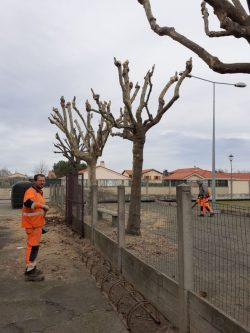 NETTOYAGE arbres (5)