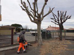 NETTOYAGE arbres (6)
