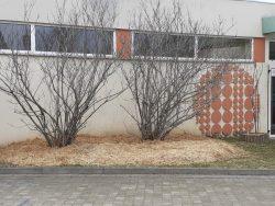 NETTOYAGE arbres (7)