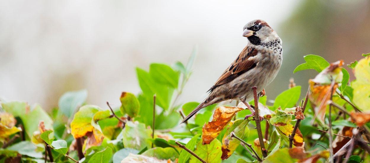 nature oiseaux